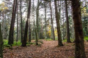 Forêt du Meygal