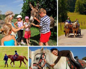 Balades avec nos amis les chevaux et les ânes