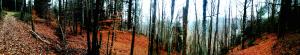 Forêt à Grazac