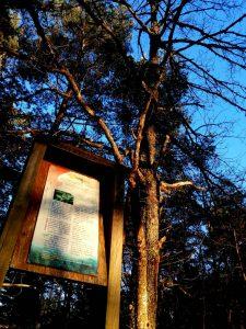 Sentier botanique de Retournac